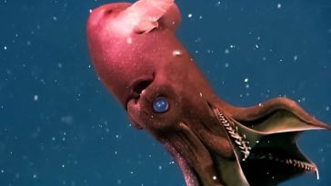 10 Sea Creatures That Look Like They're From Another Planet